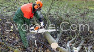 Рязане на дървета и храсти